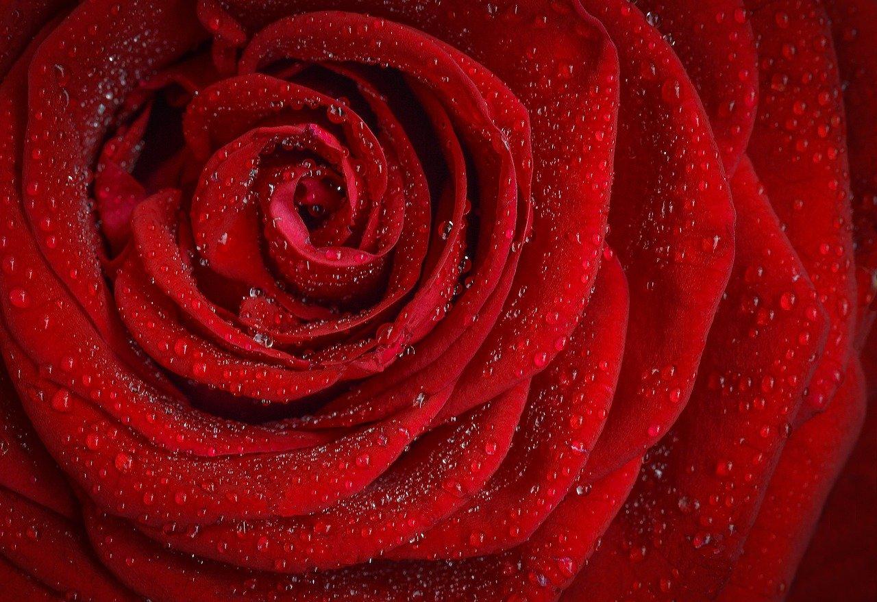 Quel est le prix du bouquet de la mariée ?